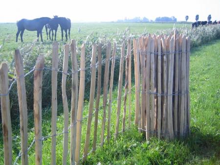 Natuurlijke tuinafscheidingen assortiment van den broek bestratingen sprundel - Bamboe hek ...